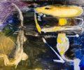Sem título, Óleo sobre tela, 120x150cm, 2010 / Untitled, oil on canvas, 120x150cm, 2010